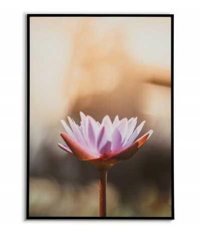 Plakat z Lilią Wodną, piękna grafika do ramki z kwiatem.
