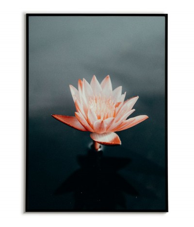 A poster for a frame with a faded pink water lily flower, beautiful graphics