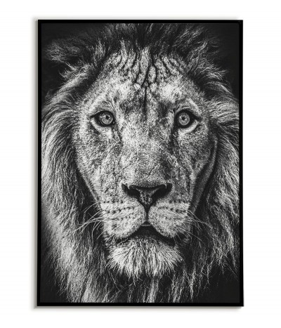 African lion poster, portrait of a lion made in black and white. Graphics perfect for the living room.