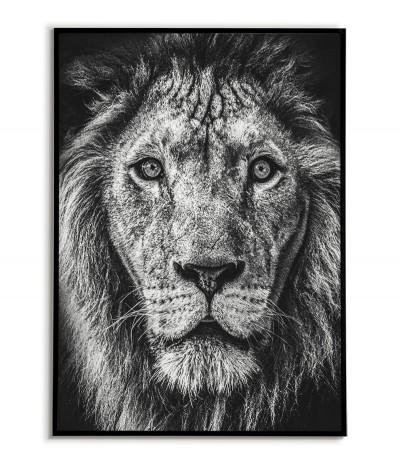 Plakat lew afrykański, portret lwa wykonany w czerni i bieli. Grafika idealna do salonu.