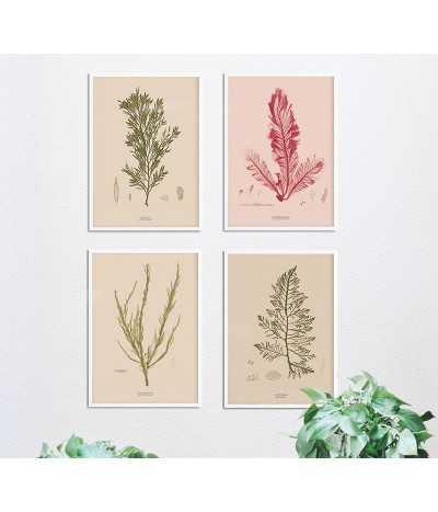 Zestaw plakatów botanicznych z roślinami. Cztery plakaty z glonami w zestawie, idealne na ścianę w stylu vintage, retro, boho